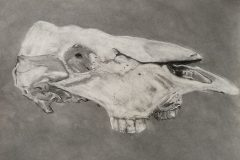Tristan Mathis     Cow Skull     Charcoal